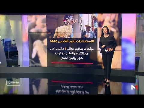 شاهد المكتب الوطني للسلامة الصحية في المغرب يُرقم 7 ملايين رأس ماشية