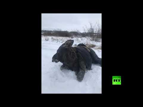شاهد إنقاذ أنثى أيل من تحت جليد نهر الفولغا في روسيا