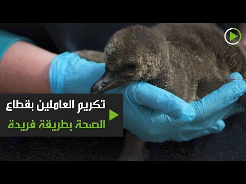 شاهد حديقة حيوانات تشيستر تُكرِّم العاملين بقطاع الصحة بطريقة فريدة