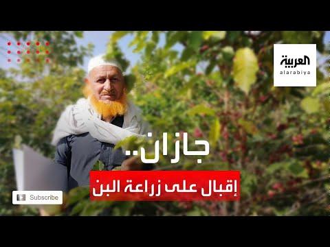 إقبال متزايد على زراعة البن في منطقة جازان السعودية