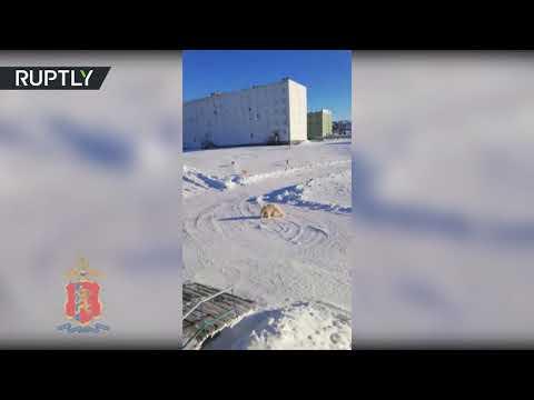 شاهددب يتدخل في ملعب أطفال في بلدة روسية